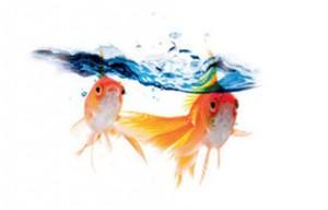 peinture Hydroactiv ' V33 pour peindre mur de la douche et de la salle de bain et qui assure l'étanchéité sur les murs de la salle de bain. Ideale pour douche italienne peinture acrylique 12 couleurs finition satin