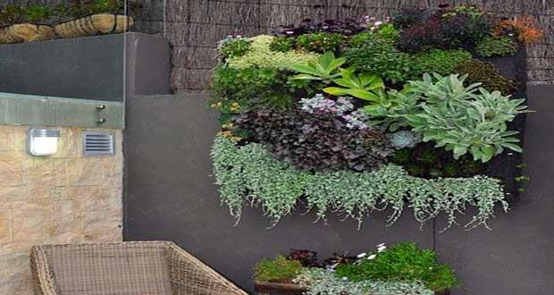 La succulente est une plante grasse tendance que l'on voit partout en ce moment. On apprécie les succulentes en déco extérieure en mur végétal ou plantées en terrarium à l'intérieur de la maison pour leur résistance et leur variété de couleurs