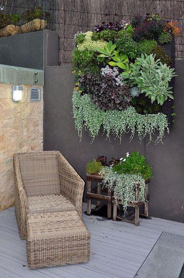 La succulente accepte très bien une disposition qui change : en mur végétal ou en jardin vertical. La technique de plantation est un peu différente, mais facile à mettre en œuvre pour un résultat original.