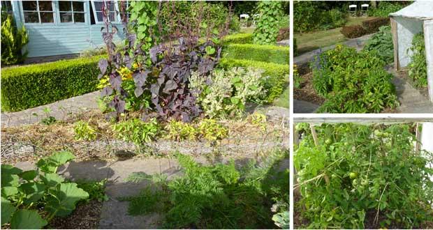 Pour faire des économies d'eau, l'arrosage goutte à goutte du potager est une installation préconisée par tous les jardiniers. Découvrez trois astuces pour un arrosage goutte à goutte efficace et pas cher à faire soi-même