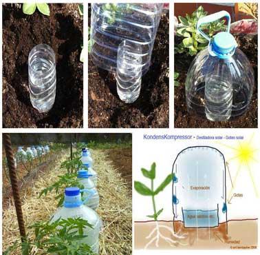 Pour irriguer un potager de manière constante, un système d'arrosage goutte à goutte installé avec des bouteilles de plastique enterrées autour des plantations