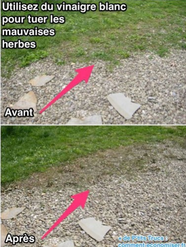 Différence entre avant et après l'application du désherbant naturel sur les herbes de l'allée du jardin. La preuve que ce produit naturel est efficace contre les mauvaises herbes.